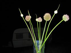 Flower O
