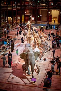 Paris_Naturhistorisches Museum