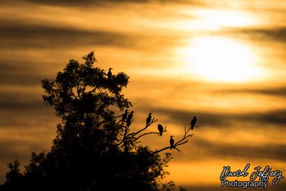 Cormorant Tree 27.07.19