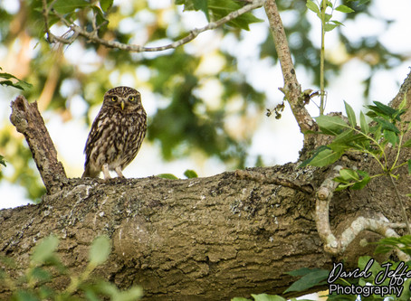 A special evening with The Little Owls 30.06.19
