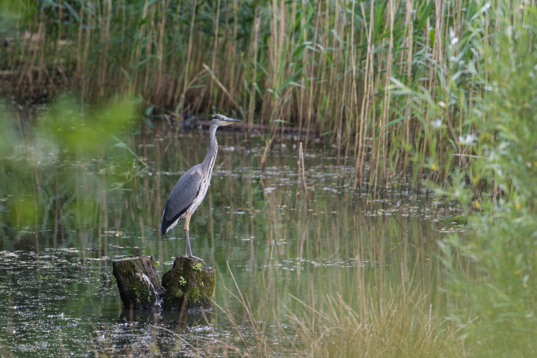 DAVID_JEFFERY Weir Wood Reservoir and Ashdown Forest 16.06.18 0005