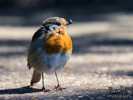 Friendly Robin 18.08.19