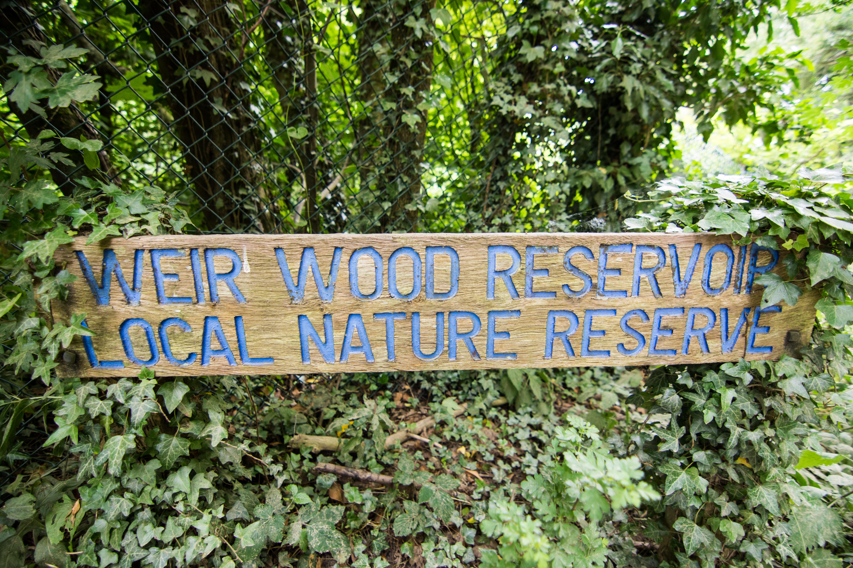 DAVID_JEFFERY Weir Wood Reservoir and Ashdown Forest 16.06.18 0002