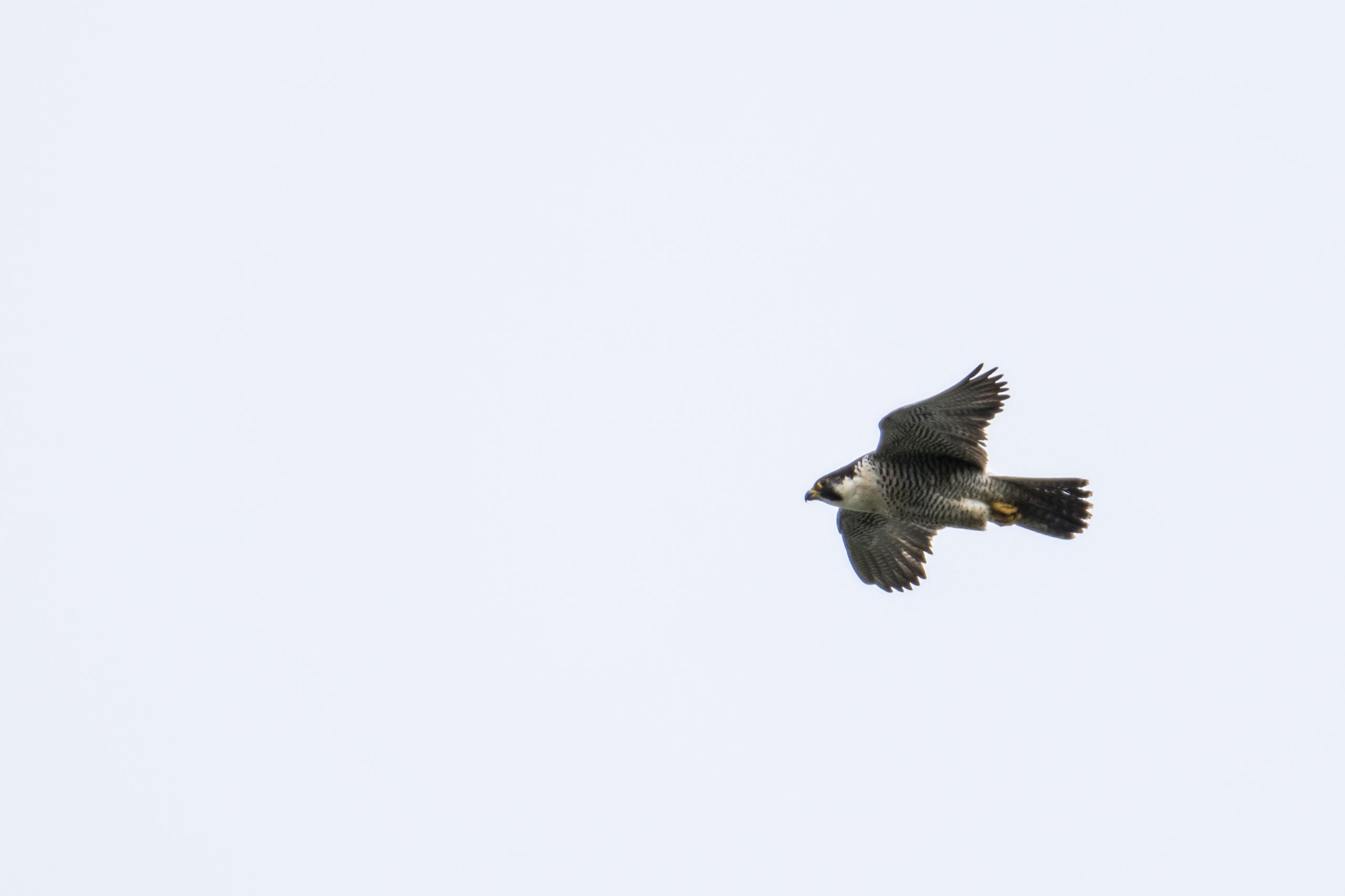 DAVID_JEFFERY Dalby Forest and Ravenscar 05.06.18 0016