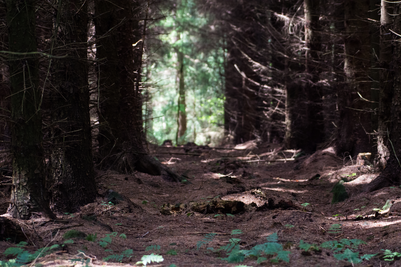 DAVID_JEFFERY Dalby Forest and Ravenscar 05.06.18 0013