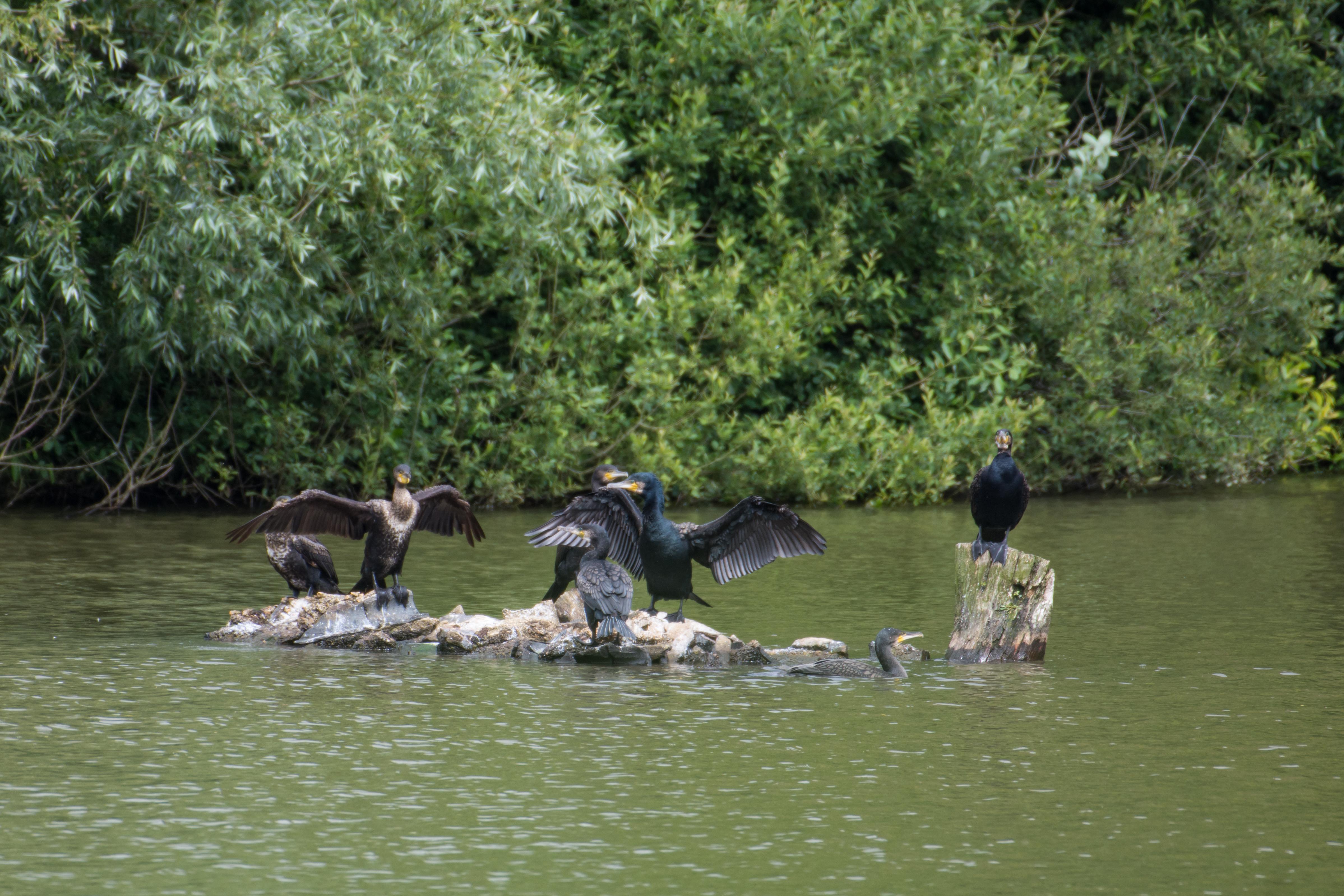 DAVID_JEFFERY Weir Wood Reservoir and Ashdown Forest 16.06.18 0022