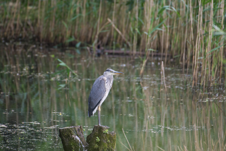 DAVID_JEFFERY Weir Wood Reservoir and Ashdown Forest 16.06.18 0004