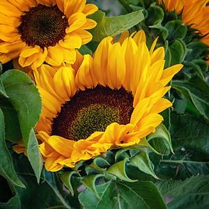 Karen Jane's Florist