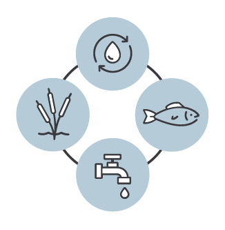 newday-fresh-water-themes-ecosystem.png