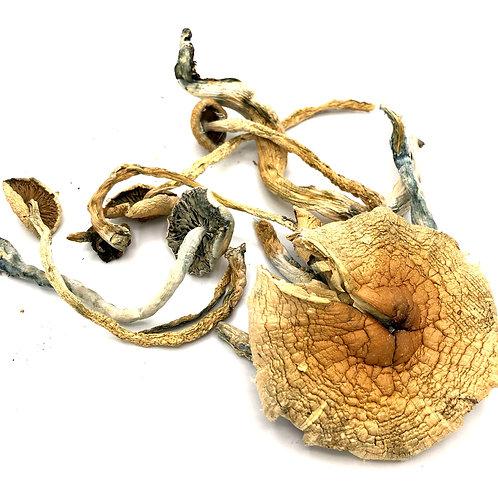 Golden Teachers (Raw Mushrooms)