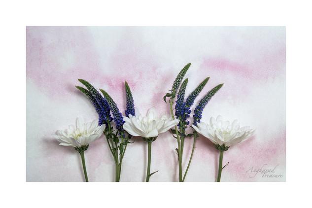 Lavender coloured