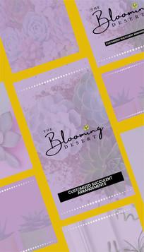 The Blooming Desert Branding