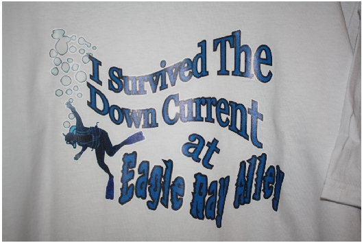 I survived the down current at Eagle Ray