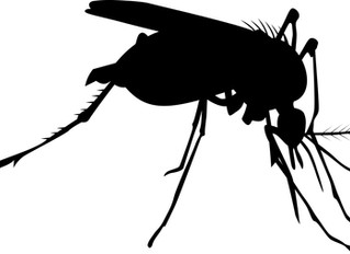 Why mosquitoes prefer your blood.