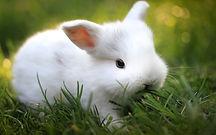 rabbit_wallpaper_tumblr-1024x640.jpg