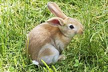 bunny-837443_1920.jpg