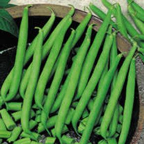 French Beans dwarf plant