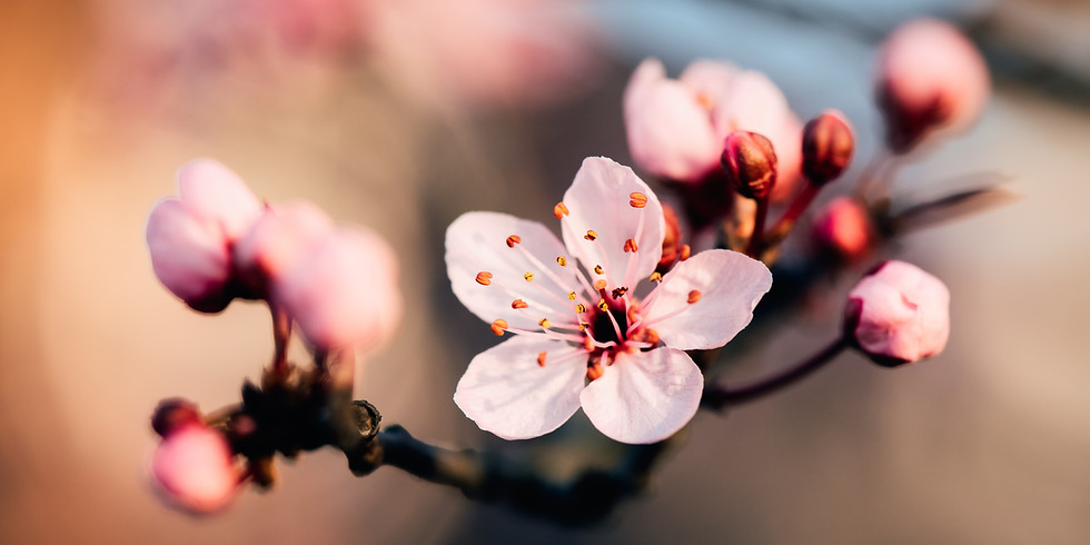 Spring Festival Weekend