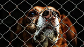 Homeless Pets Should Not Degrade Because They Enter a Shelter.