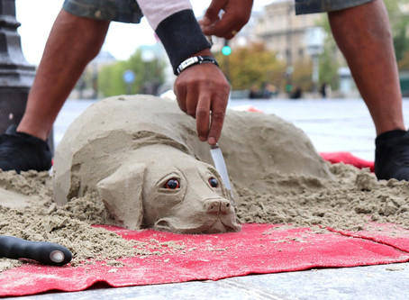 The Shifting Sands of Animal Sheltering in America (share from Paws4Change)