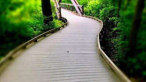 Pathway to Wonder
