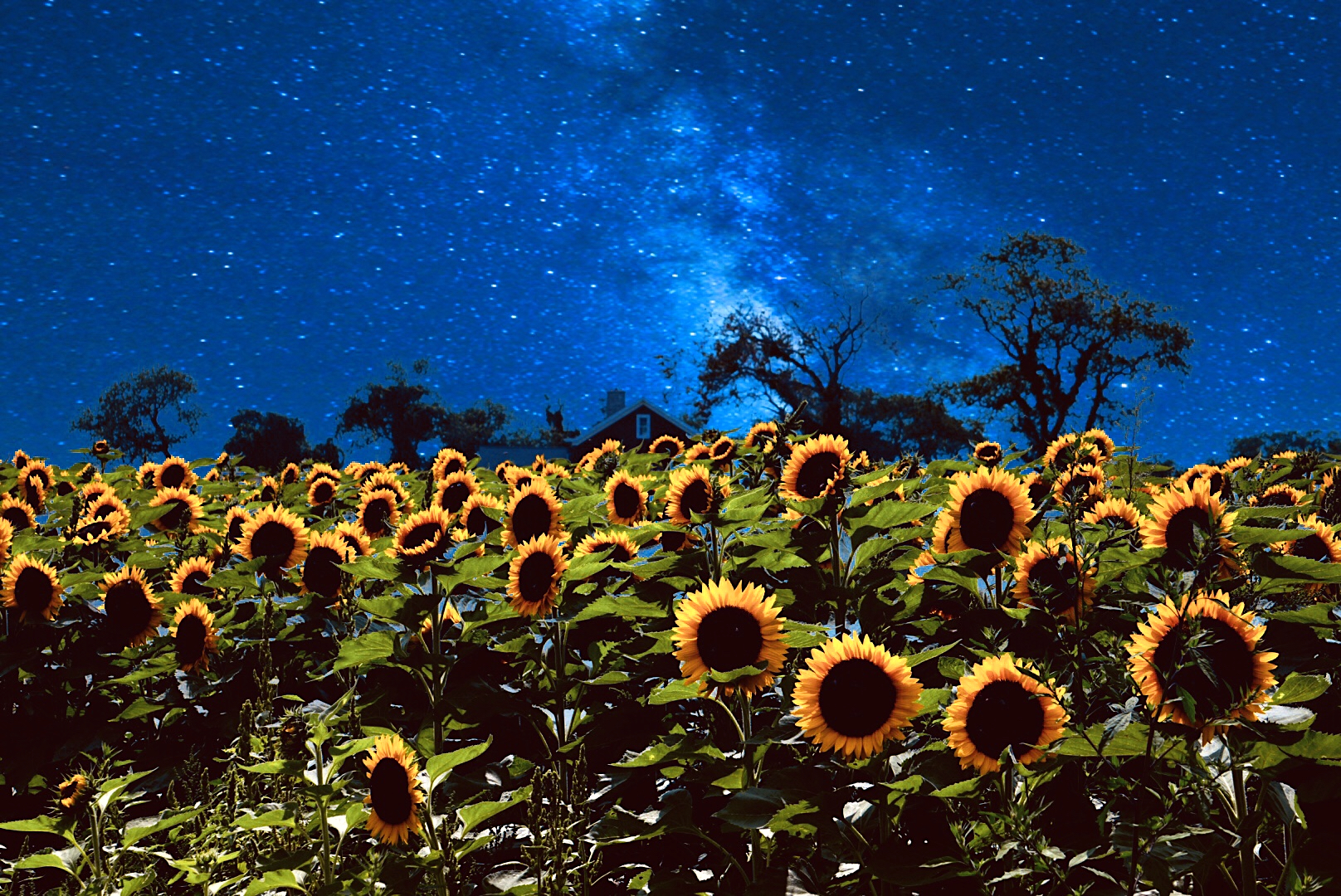 NightofSunflowers
