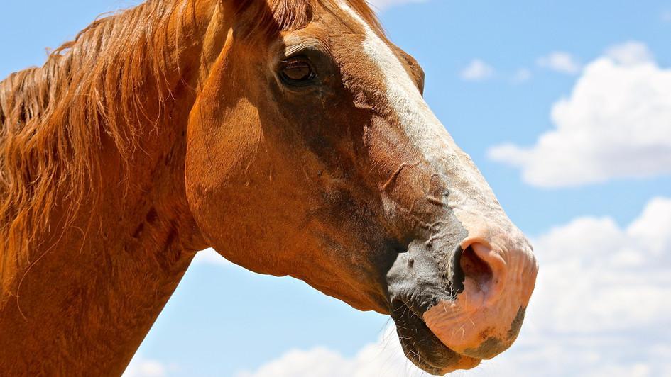 Taos Horse