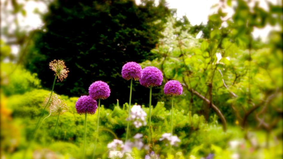 Dash Of Purple