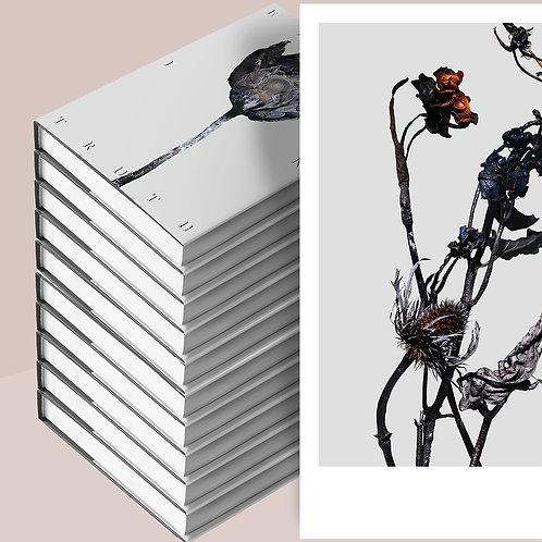 10 Books + A3 Art Print - Error in Truth Pre-Sale