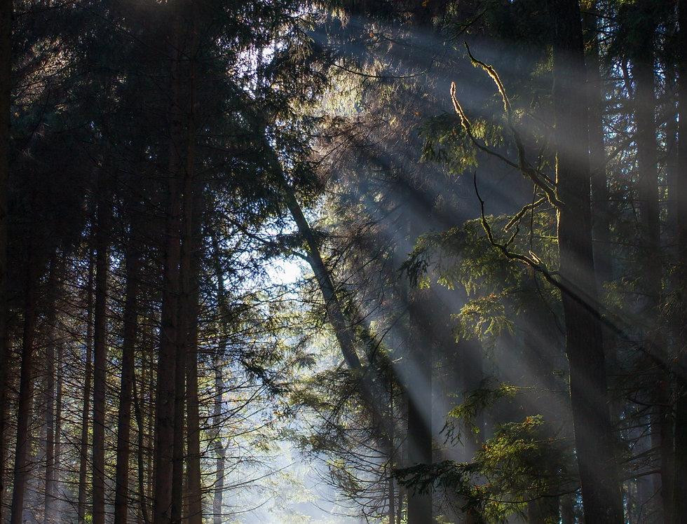 Licht im Walde