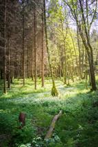 Waldspazierer 04_18-5.jpg