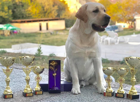 27.08.2019 International Dog Show Bulgaria!