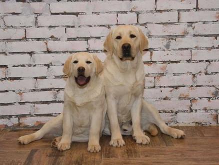 28.02.2021 «Discovery Dog Show» (CACIB) г.Владивосток