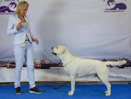 17.10.2020 г. Санкт-Петербург, Всероссийская выставка собак