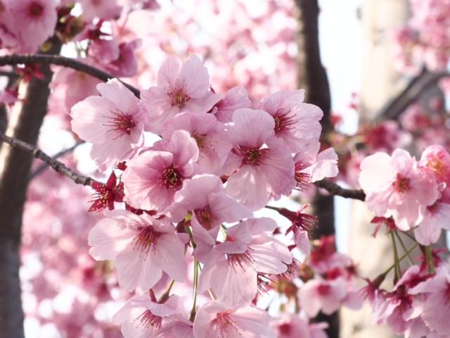 桜と職場の対話会の思い出