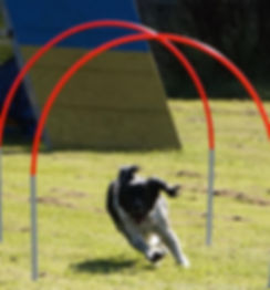 Try Hoopers at Vale Dog Training in Pershore