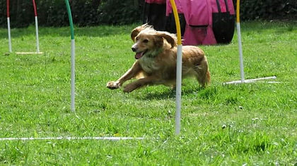 Vale dog training Pershore Hoopers classes