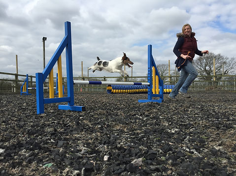 Dog Agility at Vale dog training centre pershore