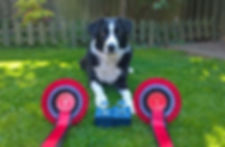 Agility at Vale Dog Training Centre Pershore Worcestershire