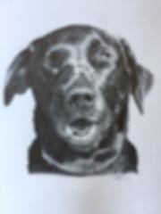 Megan Reeves dog portraits