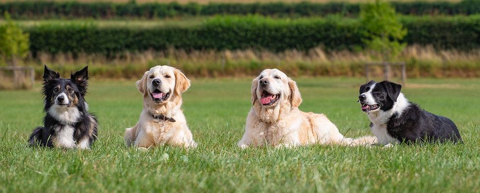 Dog Training Vale dog training centre pershore