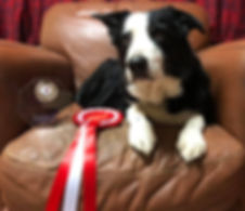try scentwork classes at Vale dog training pershore