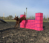top agility coaches at Vale dog training centre worcestershire