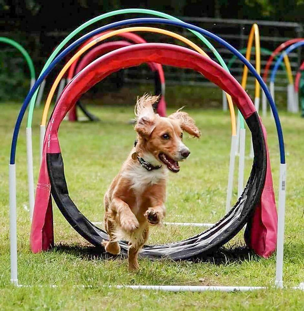 hoopers at Vale dog training