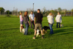 dog training courses at Vale Dog Training Centre