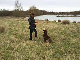 train your dog at Vale Dog Training Pershore Worcestershire