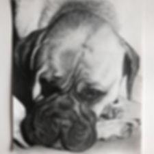 dog portraits Megan Reeves