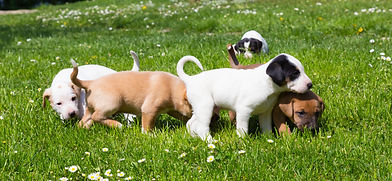puppy classes Vale dog training centre pershore worcestershire