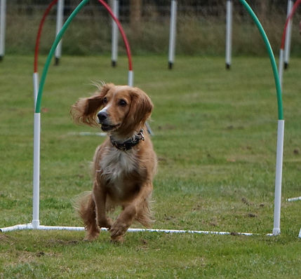 Hoopers dog training in Pershore