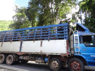 Sur la piste des camions qui puent